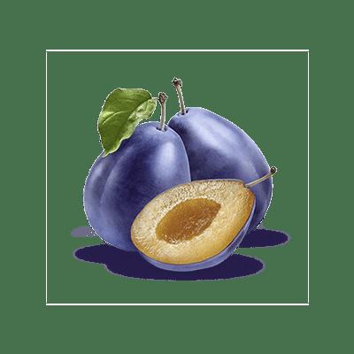 Prugne - Prugne PNG