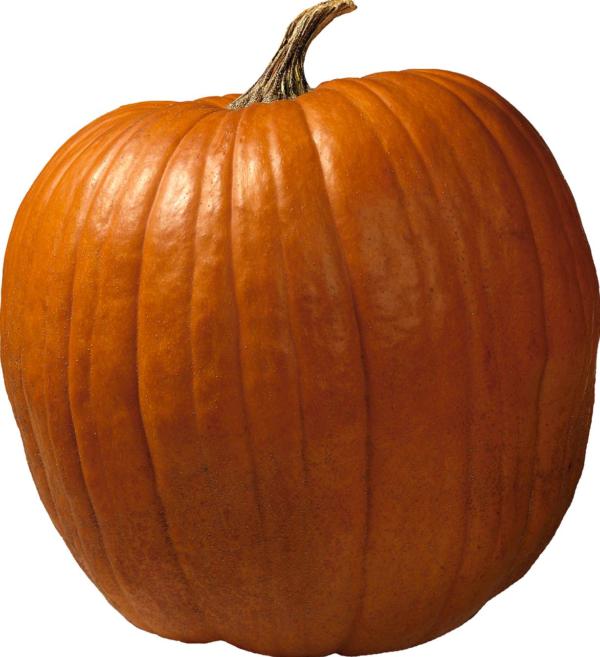 Pumpkin PNG-PlusPNG.com-1227 - Pumpkin PNG