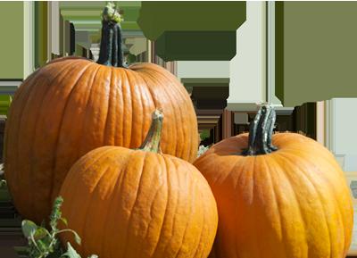 Real Pumpkin PNG Photos - Pumpkin PNG