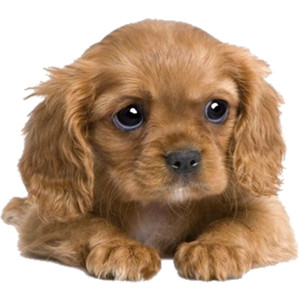 Puppy PNG - 22055