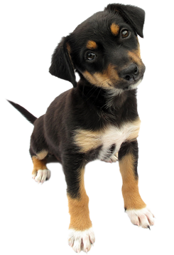 Puppy PNG - 22066