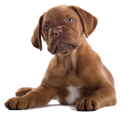Puppy PNG - 22057