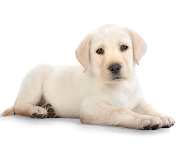 Puppy PNG - 22052