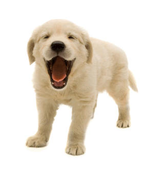 Puppy PNG - 22058