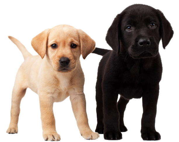 Puppy PNG - 22059