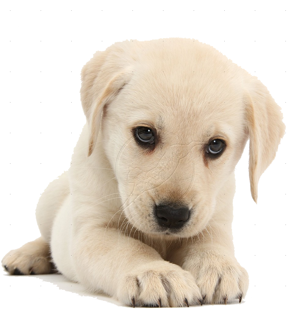 Puppy PNG HD  - 121990