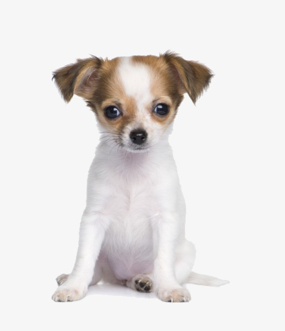 Puppy PNG HD  - 122001