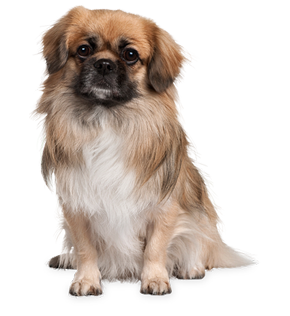 Puppy PNG HD  - 121986