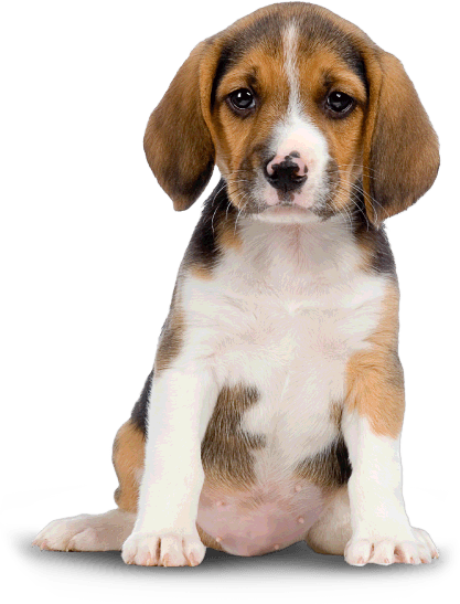 Puppy PNG HD  - 121992