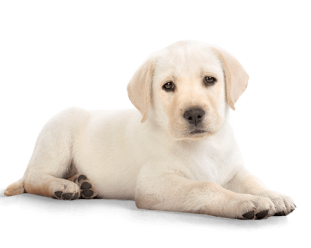Puppy PNG HD  - 121989