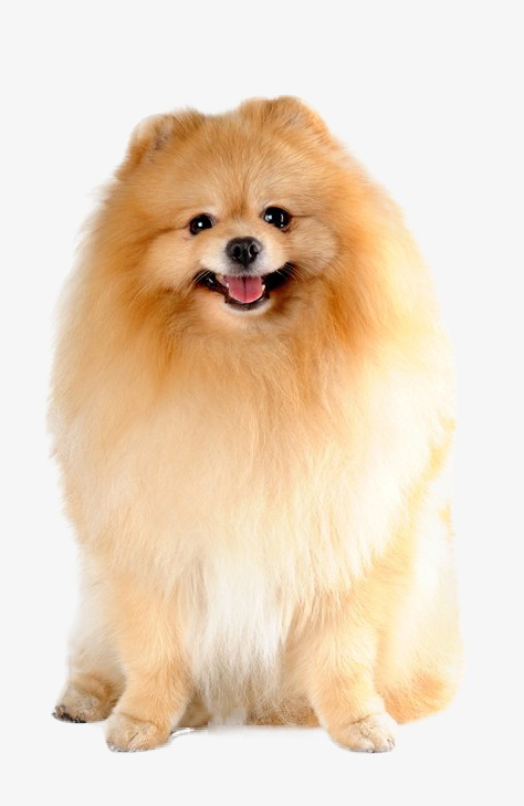 puppy, Hd, Small Dog, Hiromi Free PNG Image - Puppy PNG HD