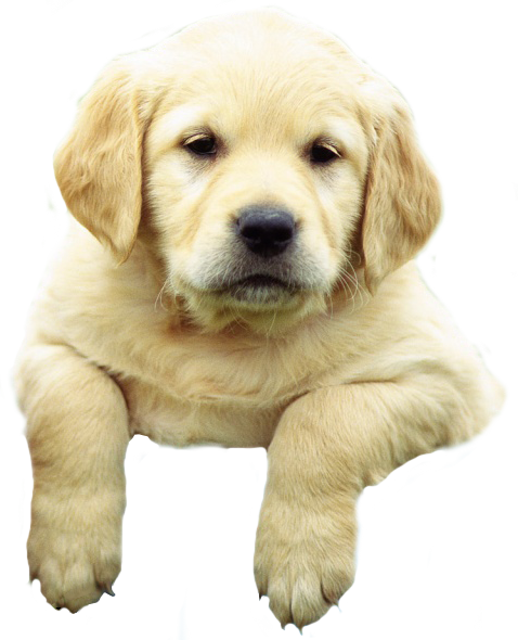 Puppy PNG - 22062