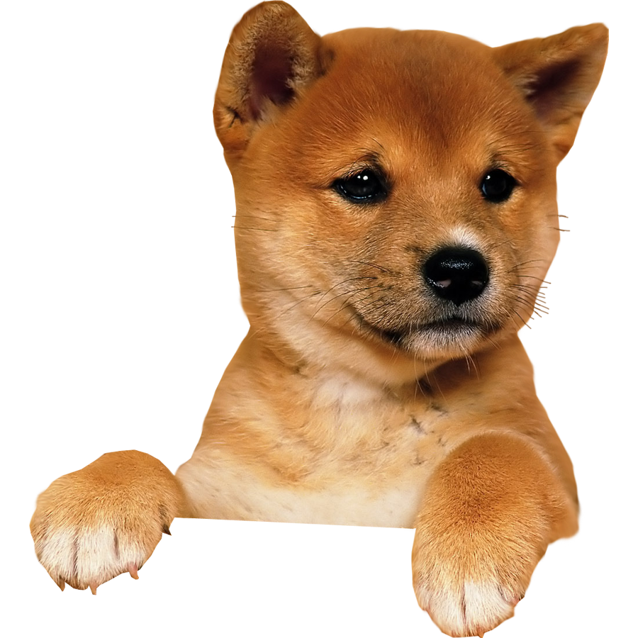 Puppy PNG - 22053