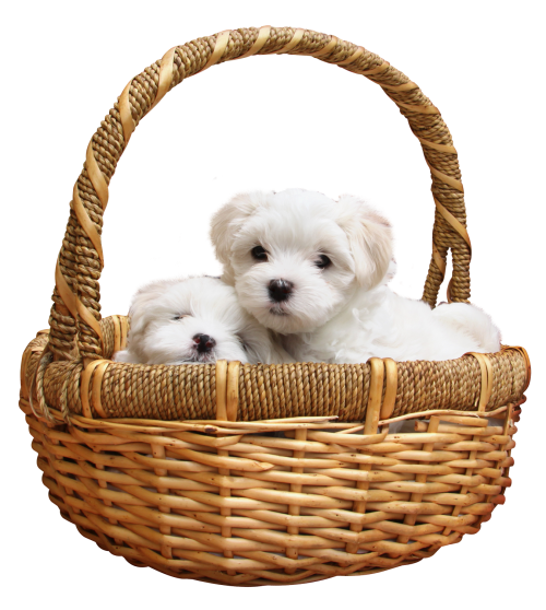 Puppy PNG - 22056