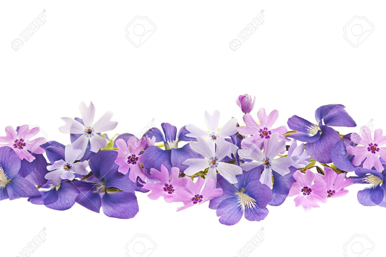 Arrangement of purple violets and moss pink flowers isolated on white  background Stock Photo - 13558504 - Purple And Pink Flowers PNG