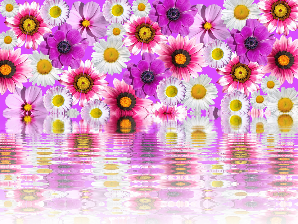 flowers pink purple pink flower garden plant - Purple And Pink Flowers PNG