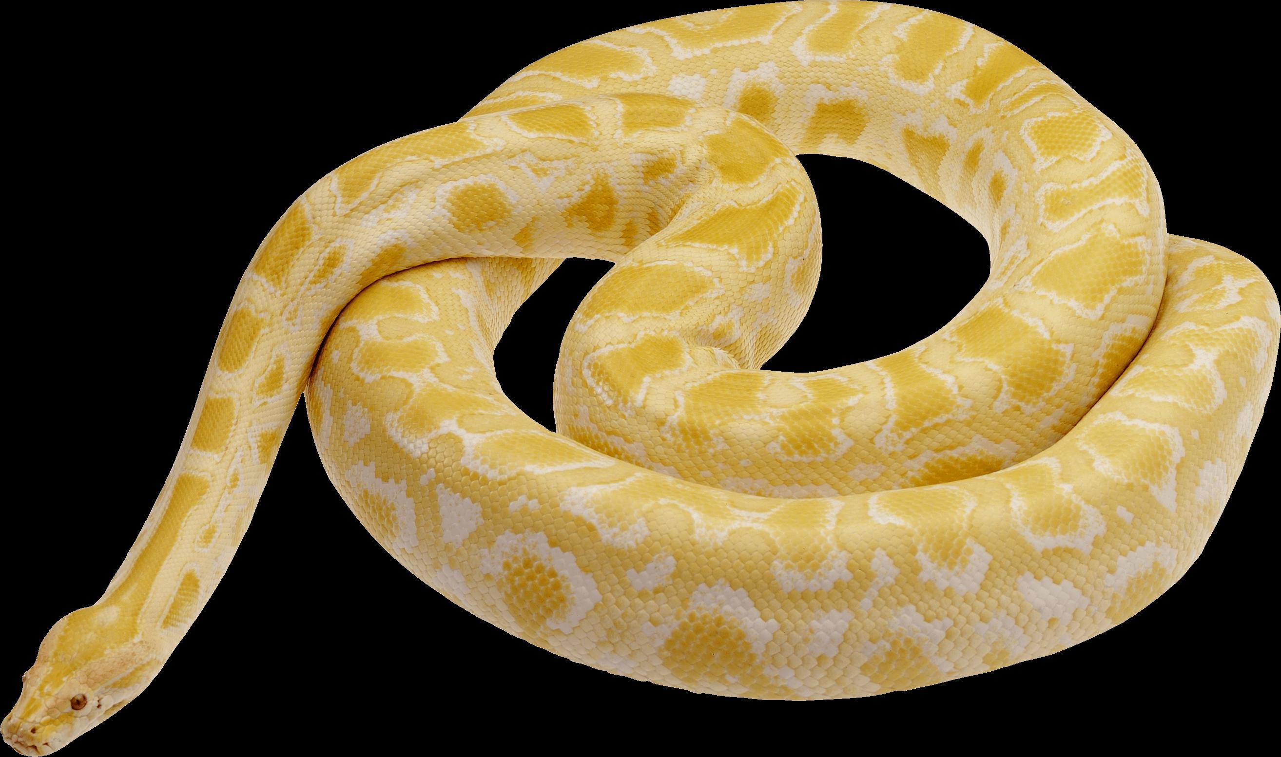 Download PNG Image - Snake Png Image Picture Download - Python Snake PNG