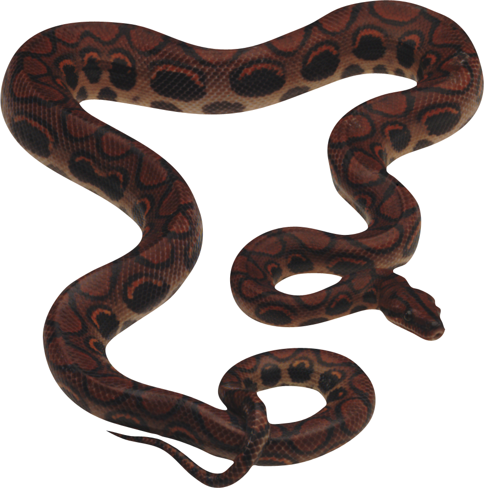Snake PNG - Python Snake PNG