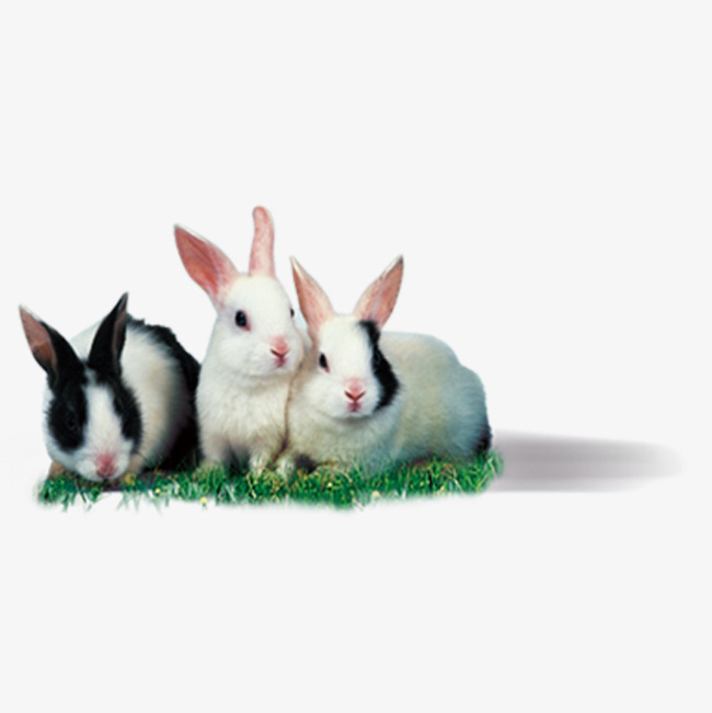 High-definition picture rabbit, Hd Bunny, Flower Rabbit, White Rabbit PNG  Image - Rabbit HD PNG