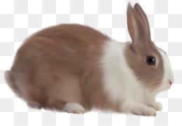 PNG - Rabbit HD PNG