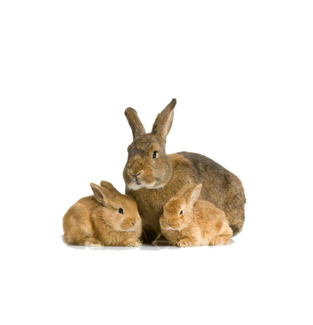 Rabbit Bunny Transparent Images - Rabbit HD PNG