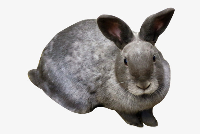 Rabbit HD Clips, Animal, Lovely, Bunny PNG Image And Clipart - Rabbit HD PNG