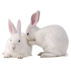 rabbits.png - Rabbit PNG - Rabbit HD PNG
