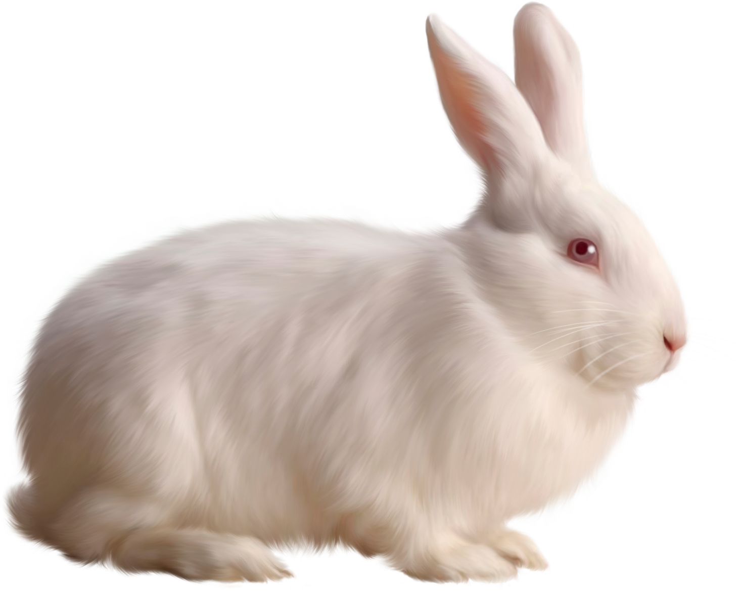 Rabbit HD PNG