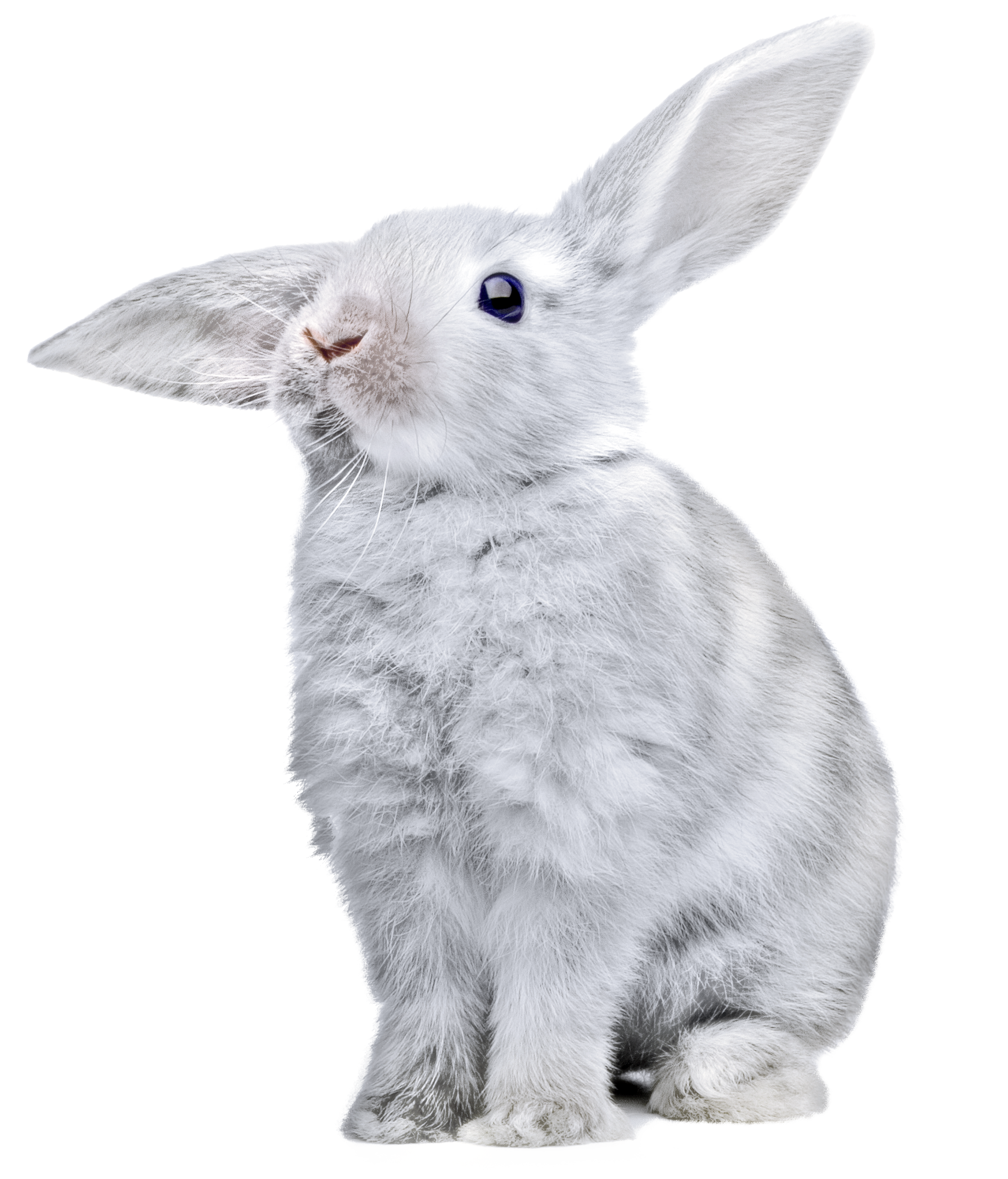 Rabbit PNG-PlusPNG.com-2453 - Rabbit PNG