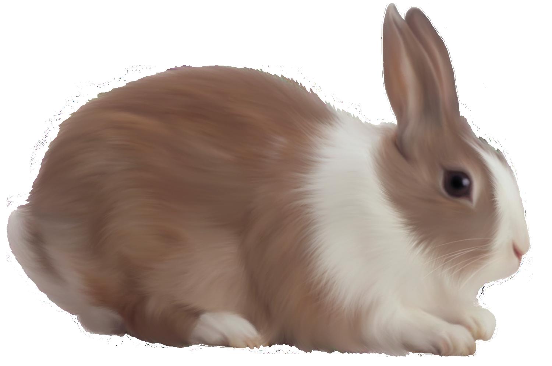 Rabbit PNG - 2858