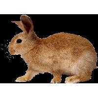 Rabbit PNG - 2864
