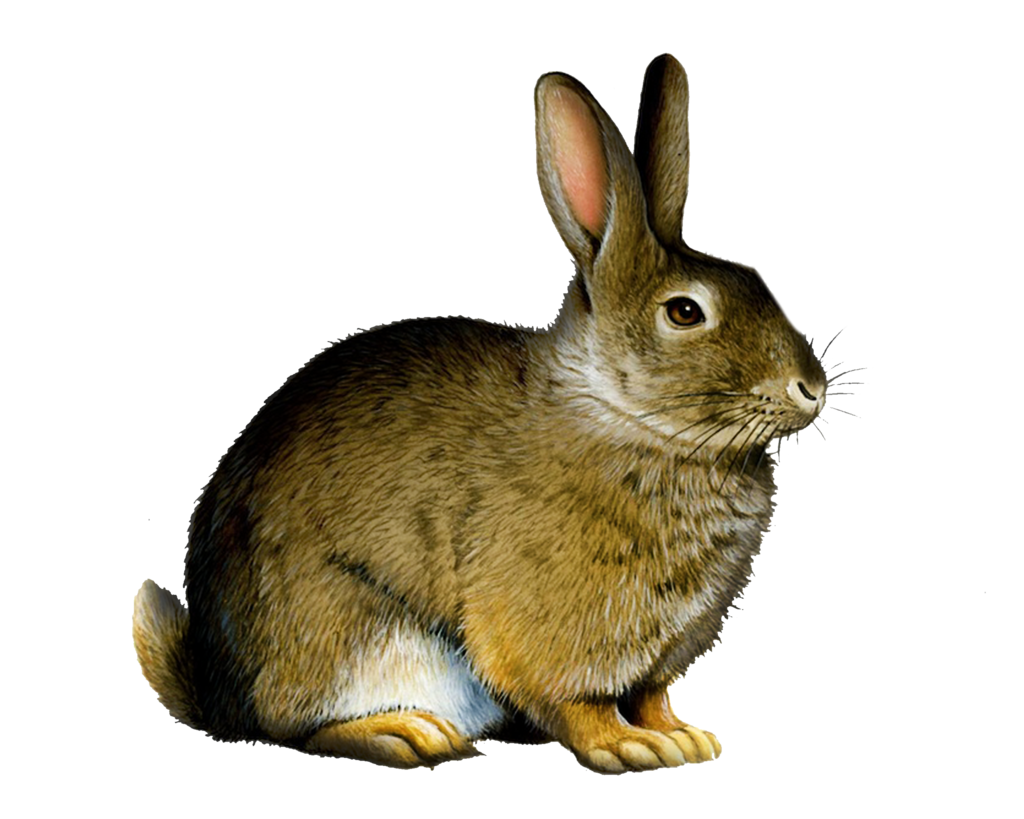 Png Rabbit By Moonglowlilly Png Rabbit By Moonglowlilly - Rabbit PNG