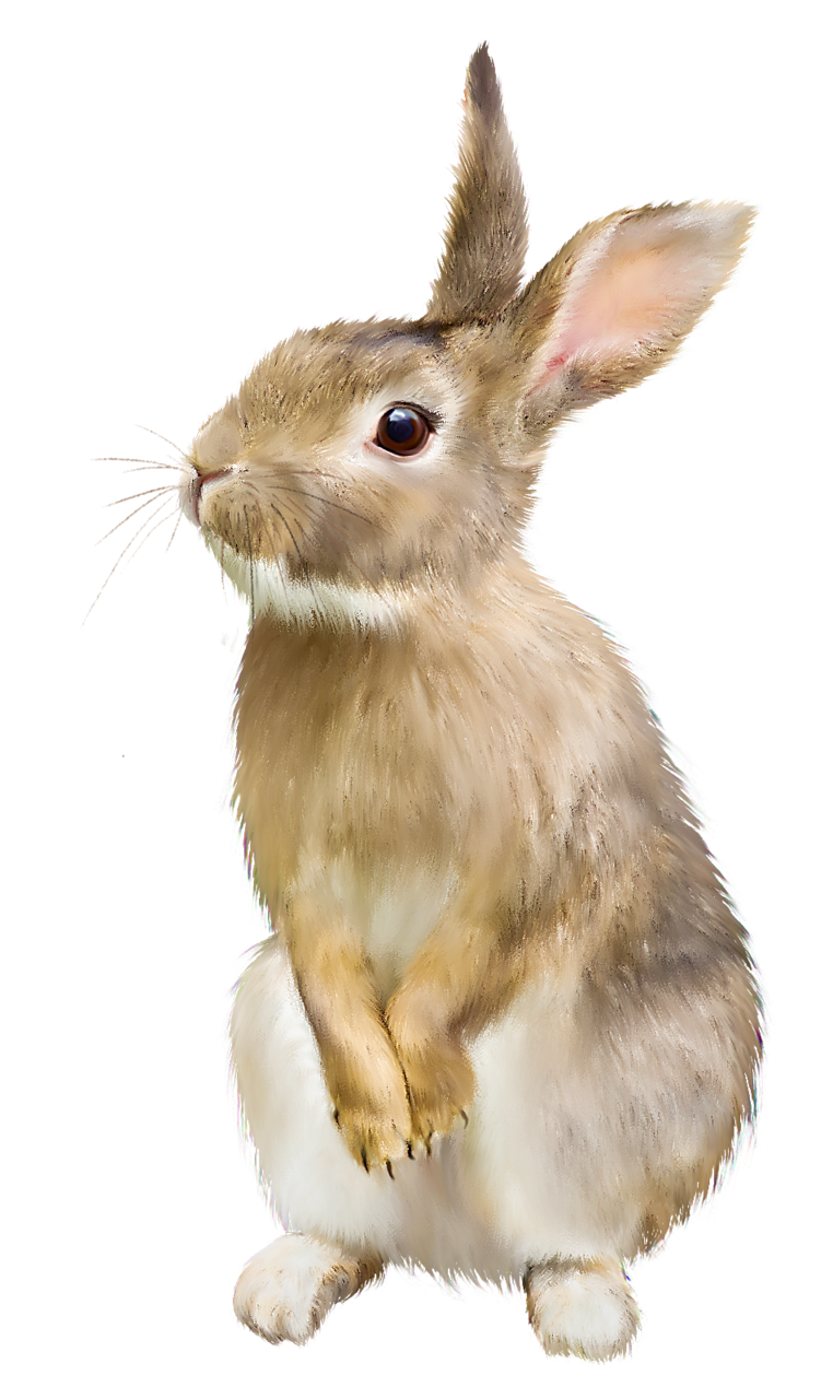 Rabbit.png (762×1280) - Rabbit PNG