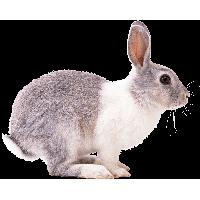 Rabbit Png Image PNG Image - Rabbit PNG