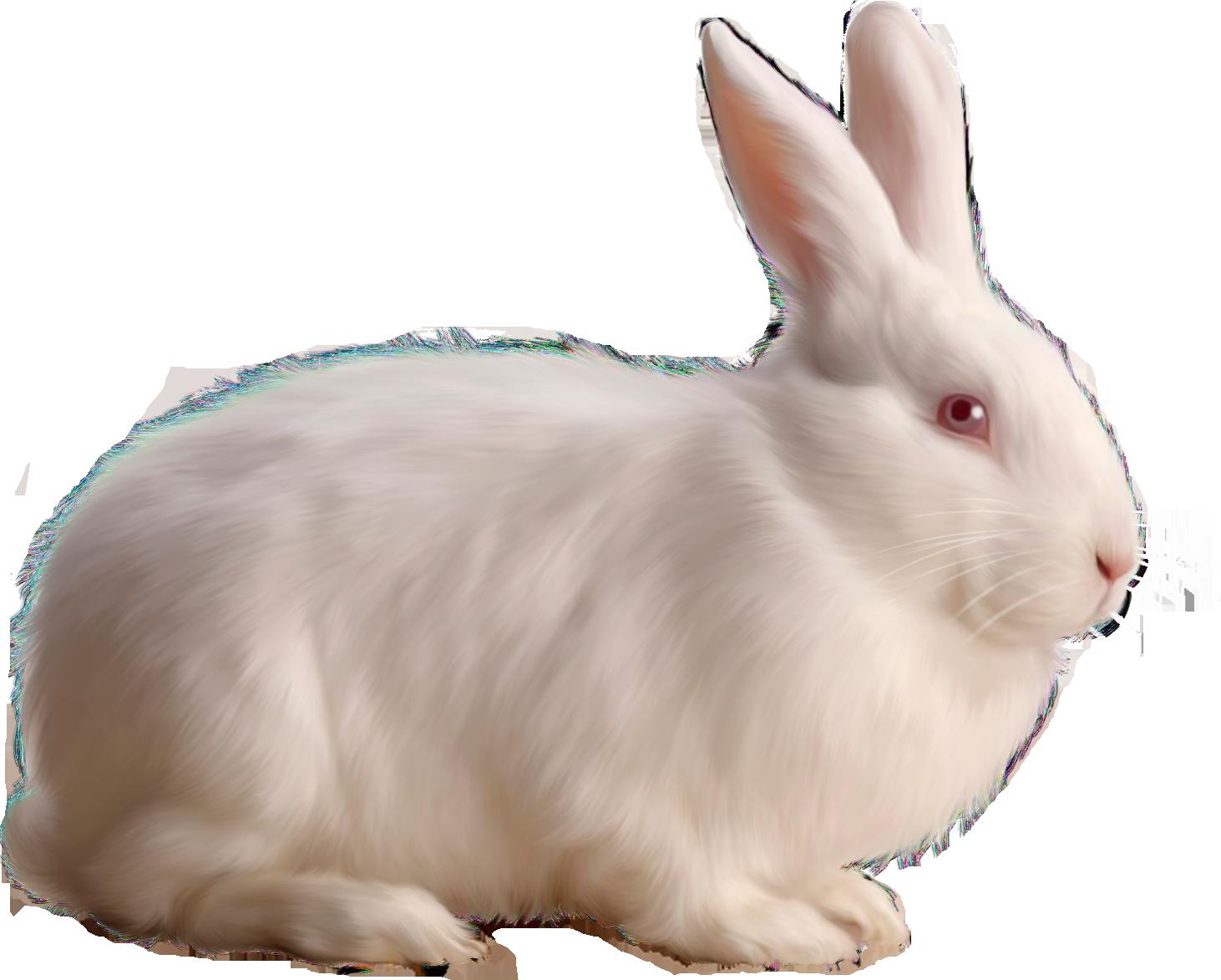 White Rabbit PNG Image - Rabbit PNG