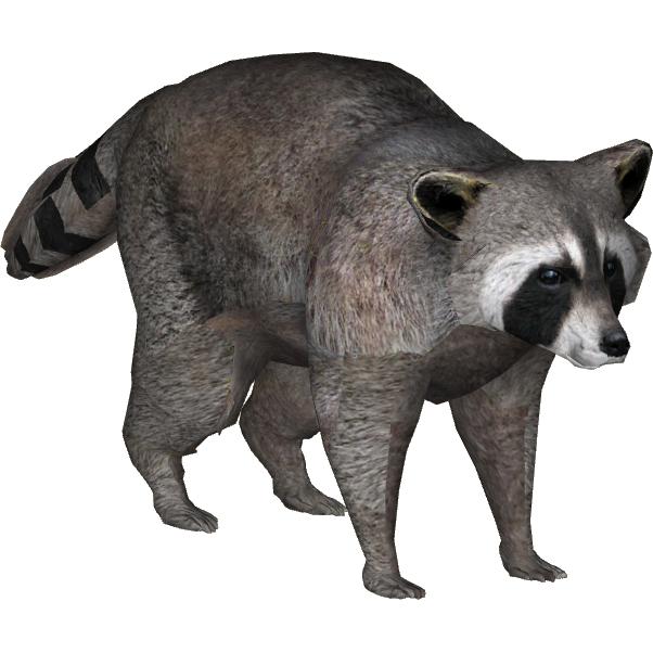 Raccoon (Zeagle Designs).png - Raccoon HD PNG