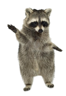 Raccoon PNG - 18237