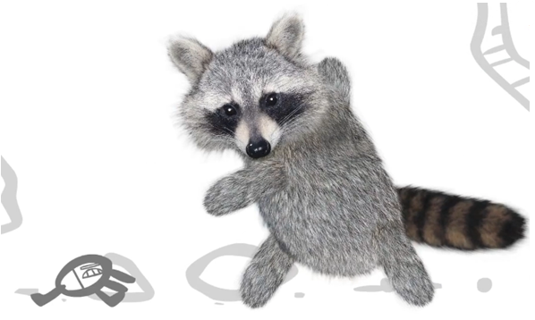 Raccoon PNG - 18247