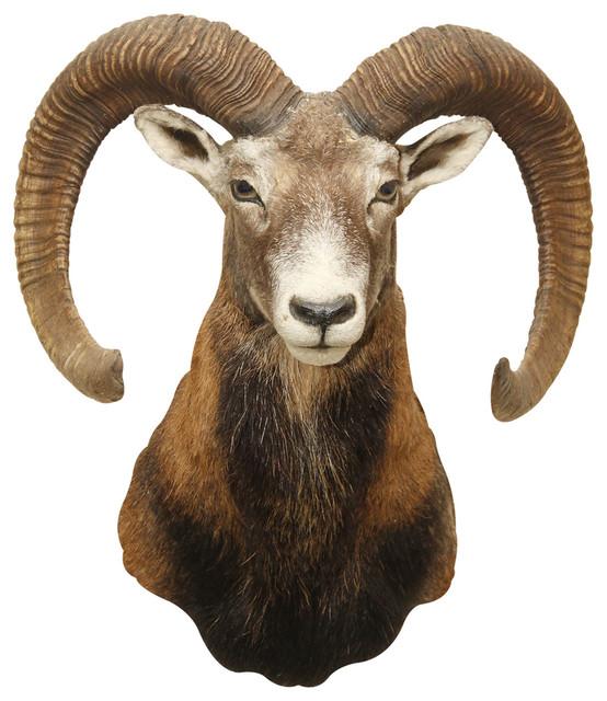 Ram Head - Ram Head PNG