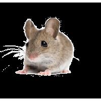 Rat Mouse PNG - 14813