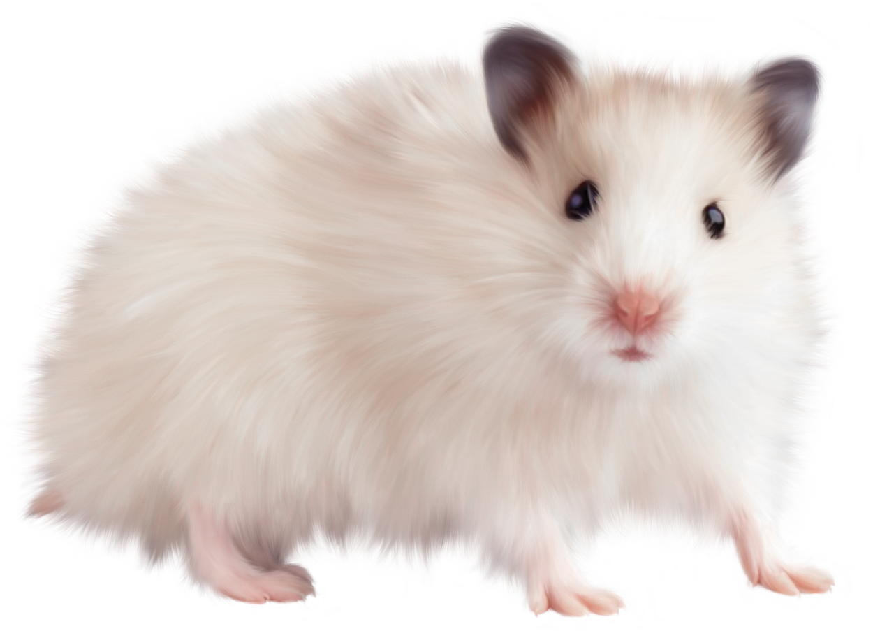 Rat Mouse PNG - 14824