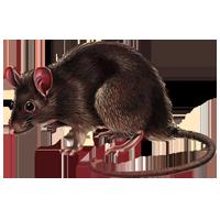 Rat PNG - 17992