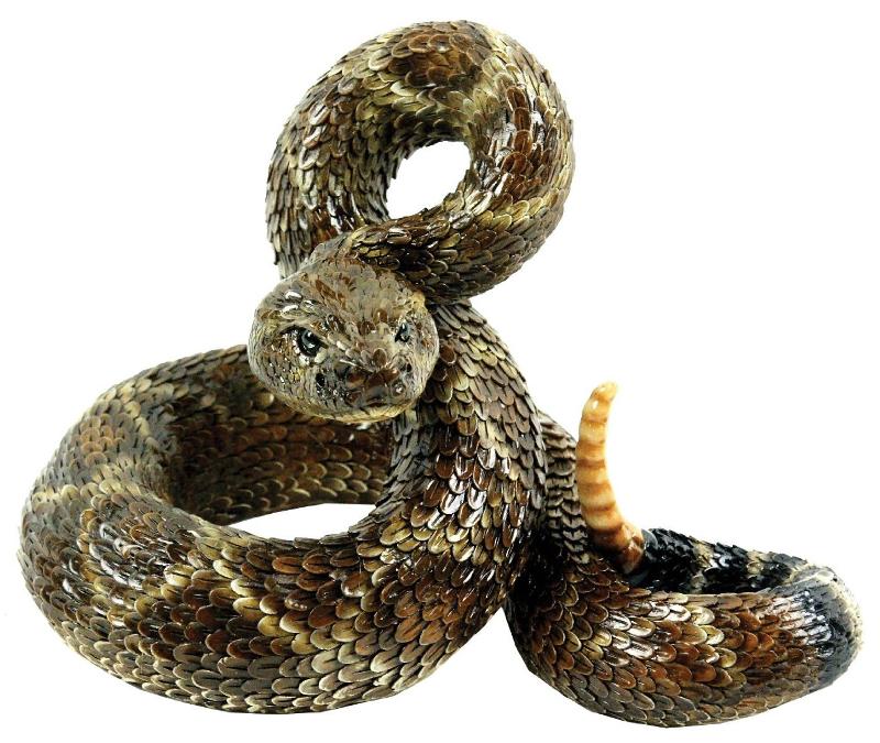 Rattlesnake PNG - 19718