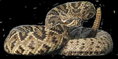 Rattlesnake PNG - 19710