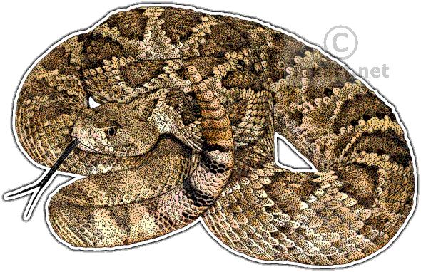 Rattlesnake PNG - 19722