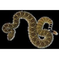 Rattlesnake PNG - 19712