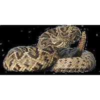 Rattlesnake PNG - 19713