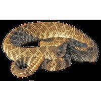 Rattlesnake PNG - 19723