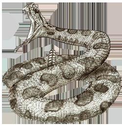 Rattlesnake PNG - 19715
