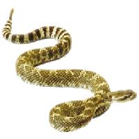 Rattlesnake PNG - 19721